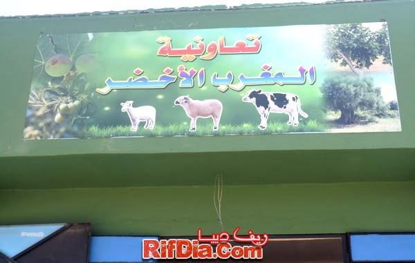 تعاونية المغرب الأخضر بني شيكر (2)