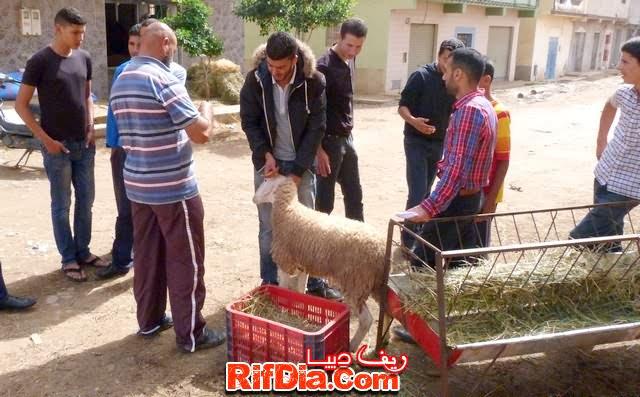 eid beni chiker (9)